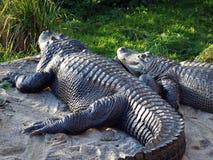 L'alligator mississippiensis dell'alligatore americano, l'alligatore, l'alligatore comune, l'Mississippi-alligatore di Der o il H fotografia stock libera da diritti