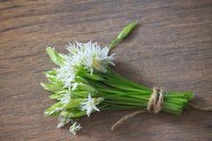 L'allium è conosciuto come aglio selvaggio Immagine Stock
