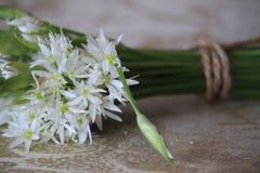 L'allium è conosciuto come aglio selvaggio Fotografia Stock Libera da Diritti