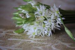L'allium è conosciuto come aglio selvaggio Fotografie Stock
