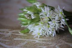 L'allium è conosciuto come aglio selvaggio Immagini Stock