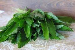 L'allium è conosciuto come aglio selvaggio Immagini Stock Libere da Diritti