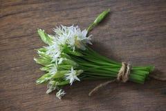 L'allium è conosciuto come aglio selvaggio Fotografie Stock Libere da Diritti