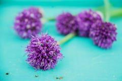 L'allium fiorisce il mazzo in un vaso decorativo del metallo alla moda Profondità del campo poco profonda Fotografia Stock