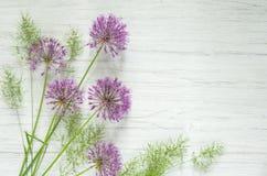 L'allium rosa fiorisce con erba verde sul fondo di legno bianco della tavola, spazio della copia Fotografie Stock Libere da Diritti
