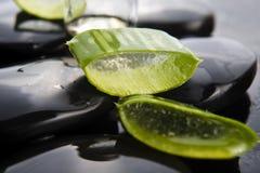 L'aloe affettato va con olio sulla pietra Fotografie Stock