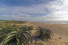 L'aloe della vegetazione della duna pianta il paesaggio costiero blu del cielo nuvoloso Fotografia Stock