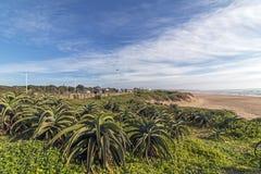 L'aloe della vegetazione della duna pianta il paesaggio costiero blu del cielo nuvoloso Immagini Stock Libere da Diritti