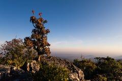 L'aloe sulle rocce dell'alta montagna abbellisce al tramonto con i chiari cieli Immagine Stock Libera da Diritti