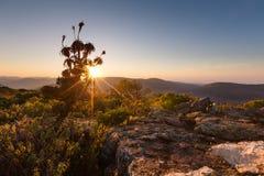 L'aloe sulle rocce dell'alta montagna abbellisce al tramonto con i chiari cieli Fotografia Stock