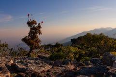 L'aloe sulle rocce dell'alta montagna abbellisce al tramonto con i chiari cieli Fotografia Stock Libera da Diritti