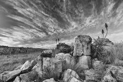 L'aloe sulle rocce della montagna abbellisce il tramonto con i cieli nuvolosi Immagini Stock Libere da Diritti