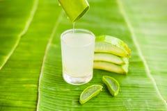 L'aloe vera collega sui precedenti della foglia della banana Concetto organico dei cosmetici Fotografia Stock