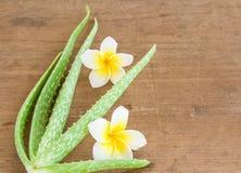 L'aloe vera ed il frangipane fioriscono sulla tavola di legno Immagini Stock