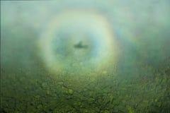 L'alone dell'ombra dell'aereo sopra la giungla, preso dall'aereo fotografie stock