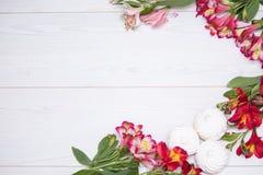 L'Alstroemeria fleurit le fond Photographie stock libre de droits