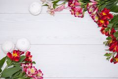 L'Alstroemeria fleurit le fond Photos libres de droits