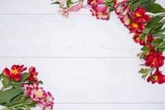 L'Alstroemeria fleurit le fond Image libre de droits