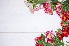 L'Alstroemeria fleurit le fond Photo libre de droits