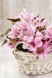 L'Alstroemeria fleurit (lis péruvien ou lis des Inca) Photographie stock