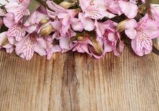 L'Alstroemeria fleurit (lis péruvien ou lis des Inca) courtisent dessus Images stock