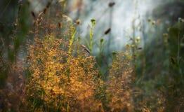 L'alta erba su un prato di verde dell'estate ha riempito di luce Fotografia Stock Libera da Diritti