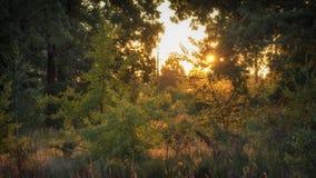 L'alta erba su un prato di verde dell'estate ha riempito di luce Fotografia Stock