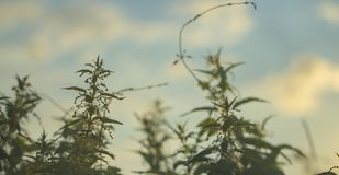 L'alta erba su un prato di verde dell'estate ha riempito di luce Immagini Stock