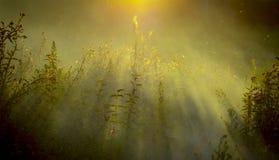 L'alta erba su un prato di verde dell'estate ha riempito di luce Immagine Stock Libera da Diritti