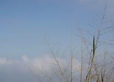 L'alta erba sul fondo del cielo blu Immagine Stock