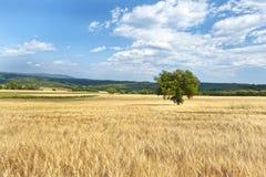 L'alta Provenza, Francia Fotografie Stock