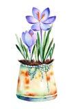 L'alta qualità ha dipinto il croco dell'acquerello 2 in vecchio vaso misero Immagine Stock Libera da Diritti