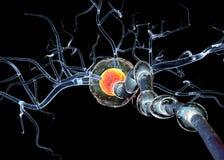 L'alta qualità 3d rende delle cellule nervose, isolato su fondo nero Fotografie Stock Libere da Diritti