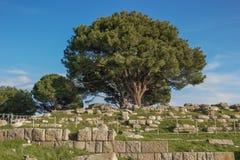L'altare di Zeus rimane Immagini Stock