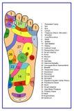 L'alternativa guarisce, agopuntura - schema del piede Immagini Stock Libere da Diritti