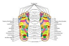 L'alternativa tradizionale guarisce, agopuntura - schema del piede Fotografie Stock