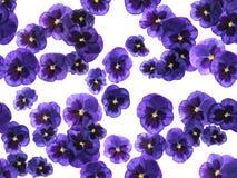 L'alto pourpre photographié fleurit sur le fond blanc, image sans couture images stock