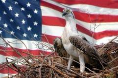 l'Amérique Photo libre de droits
