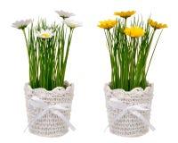 L amarillo de la primavera y blanco artificial flor en el pote decorativo aislado Foto de archivo libre de regalías