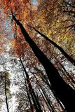 L'ambra ed il umber va sugli alberi a Nunburnholme il Yorkshire orientale Inghilterra fotografia stock libera da diritti