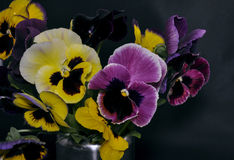L'amende de Heartsease (alto tricolore) fleurit des agains Photos libres de droits
