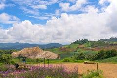 L'AMI de l'AR Chaing de montagne de confiture de lundi, Thaïlande Image libre de droits
