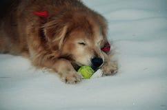 L'ami loyal prend un petit somme en hiver dans la terre de chiot Images stock