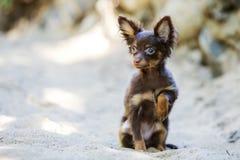 L'ami poli de chien montre ses qualifications Image libre de droits