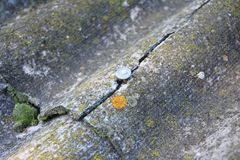 L'amiante criqué couvre le vieux toit L'amiante essente la réparation et le retrait Retrait de toit d'amiante de Chambre Photographie stock libre de droits