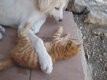 L'amitié Photo libre de droits
