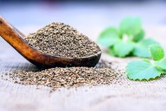 L'ammi de Trachyspermum, graines d'Ajwain dans un scoop en bois avec certains part sur un fond de jute Image stock