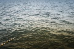 L'amorce à la profondeur de la mer, près du dauphin nage image libre de droits