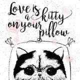 L'amore è un gattino sul vostro cuscino, citazione di amore circa gli animali domestici Fotografie Stock