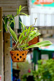 L'amore fiorisce l'orchidea sola nel cielo fotografie stock libere da diritti